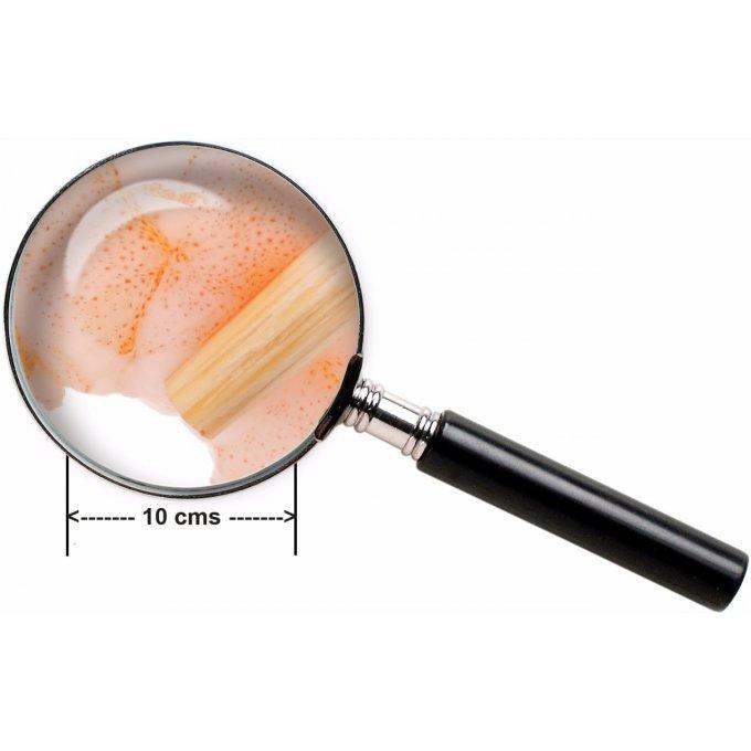 Cr dence de cuisine d corative crevettes - Credence decorative cuisine ...